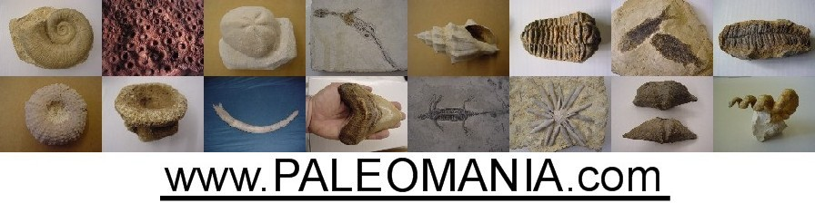 PaleoMania Forum